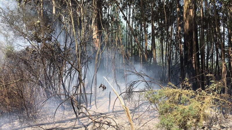 Incendioforestalordes